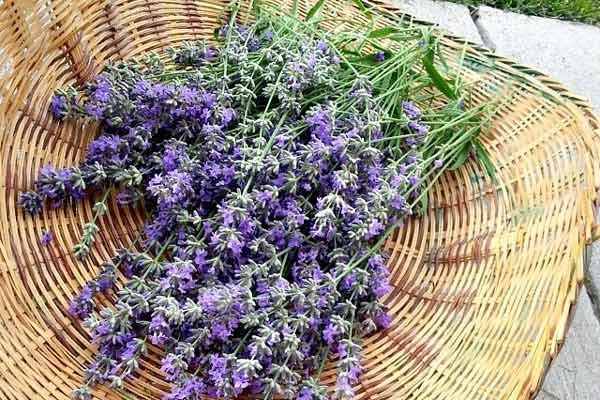 How To Use Lavender Herb (for home, body, and food ...